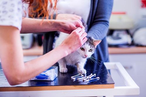 la Lotion auriculaire pour chat